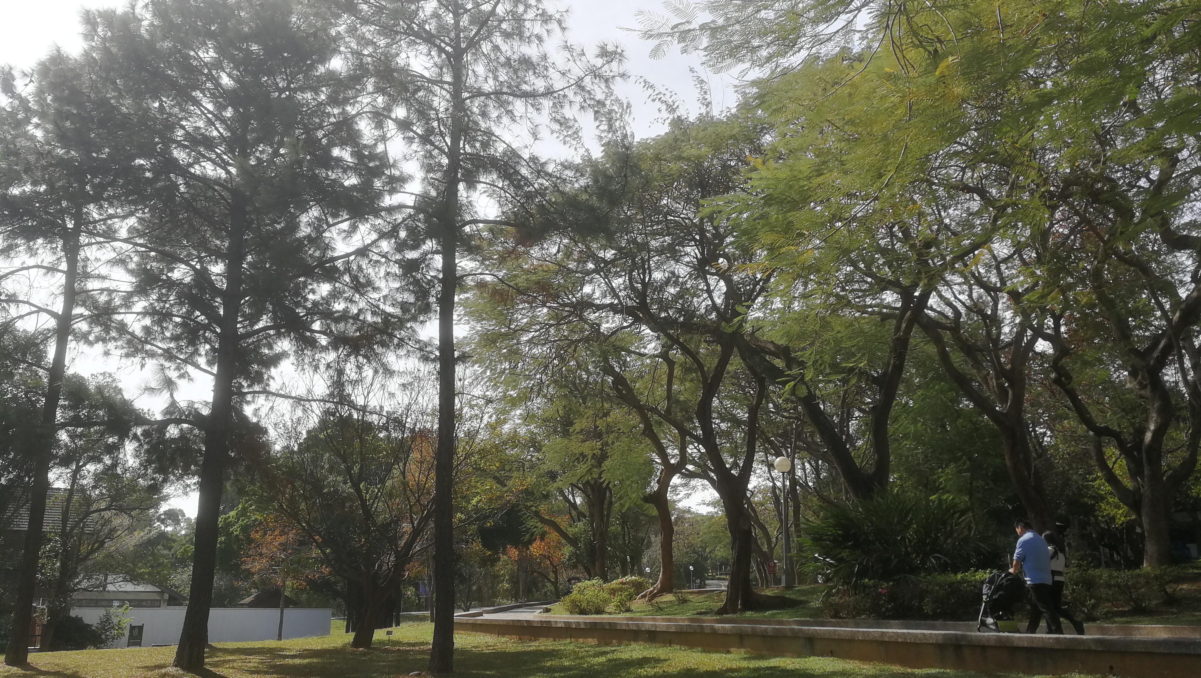 2020年1月25日上午,位于台中市的东海大学,校园内行走的人。本文图片均为作者拍摄并提供。