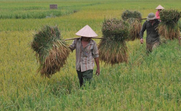食为天|新冠疫情会危及中国粮食安全吗?
