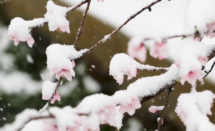 一场春雪,神农架成童话世界