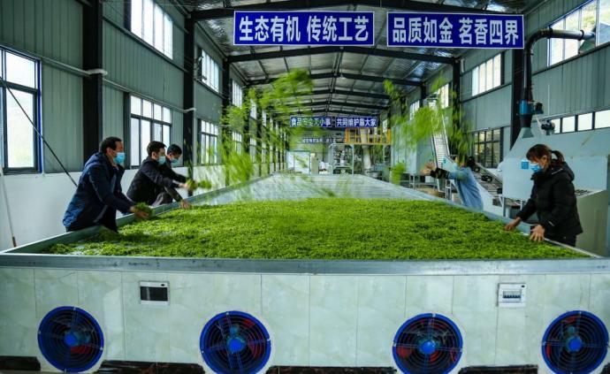 買鄂 疫情沖擊下遇銷售難,湖北巴東茶產業求援手