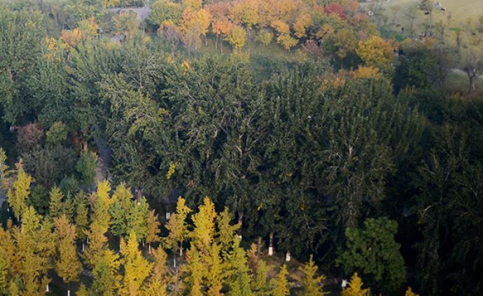 國家森防指辦公室向四川、云南發布高森林火險紅色預警