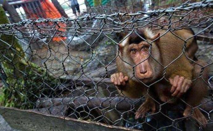 甘肃:违反野生动物禁食禁捕规定将在现行法规基础上加重处罚