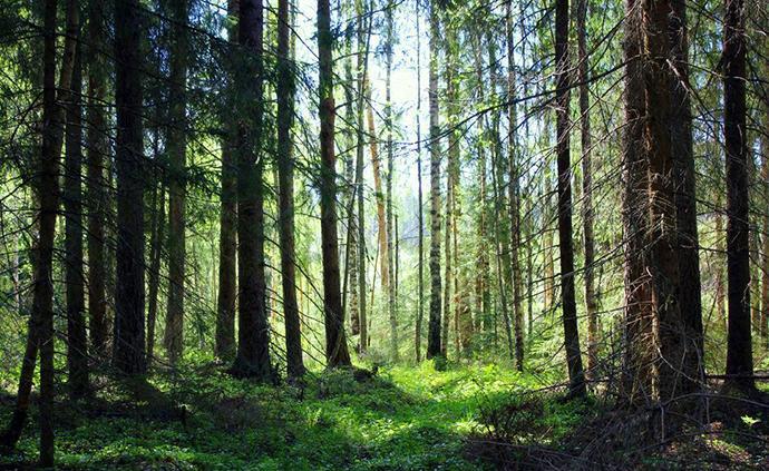 三部门将对四川云南等9省区进行森林防灭火工作督查