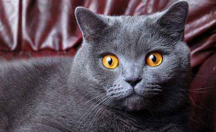 貓對新冠高度易感,狗相對低敏:來自中國P4實驗室最新研究