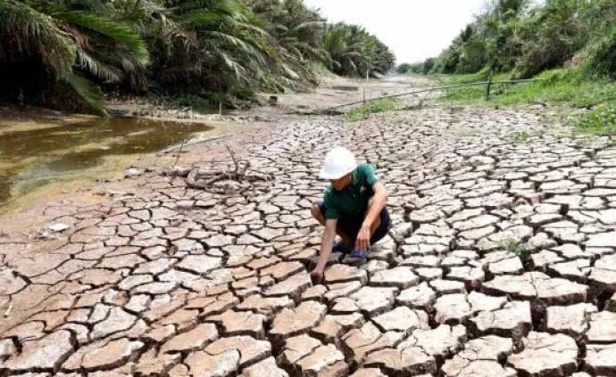 泰國越南遇干旱大米產量降低,國際米價大幅上漲創六年來新高