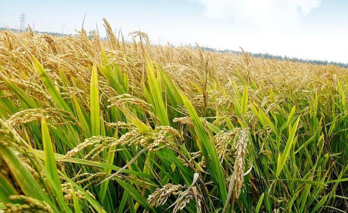 国家粮储局:人口集中城市已建立10到15天的成品粮储备