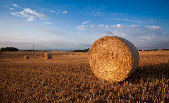 农业农村部:国际粮价上涨对国内影响十分有限