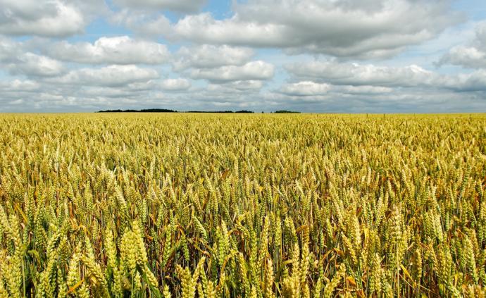 农业农村部:今年稻谷、小麦种植面积要继续稳定在8亿亩以上