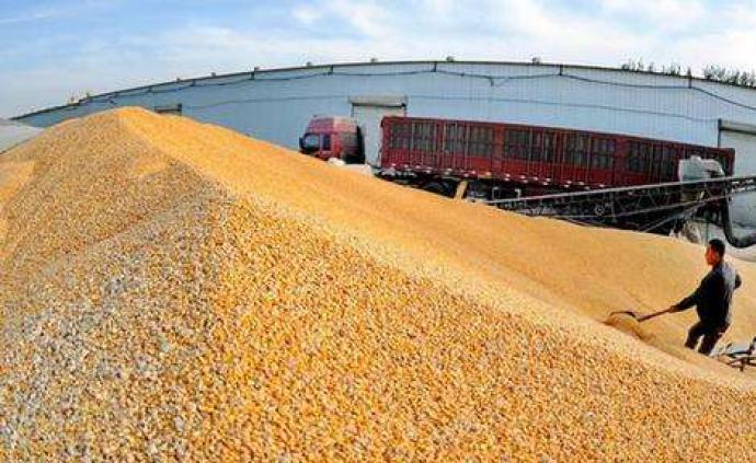 解讀|全球疫情下的中國糧食保障:產量豐庫存足,不必囤積