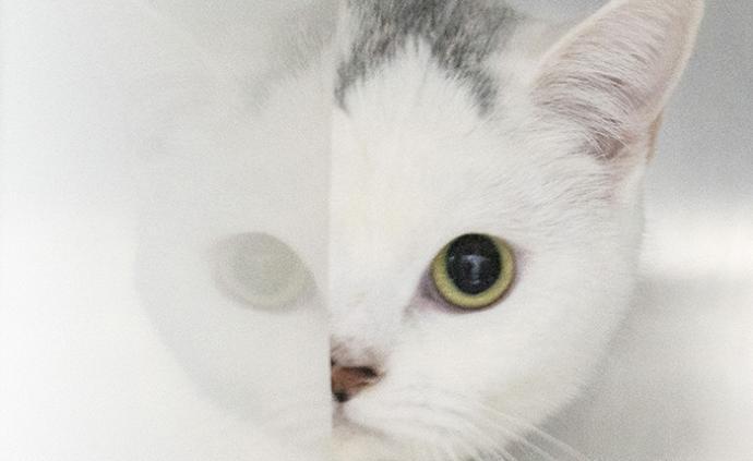 論文作者談14.7%的貓感染新冠病毒:僅限高風險來源樣本