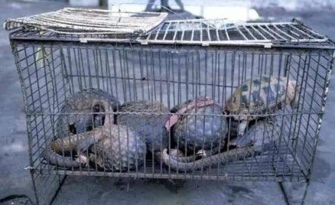 斩断交易链,市场监管总局曝光首起短视频销售野生动物案
