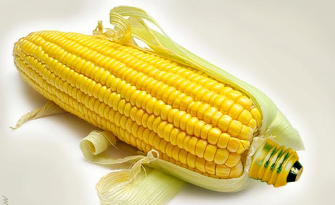 食為天|主要糧食出口國會限制出口嗎?