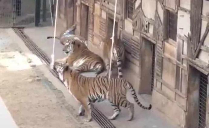 """云南野生动物园回应""""钓老虎""""互动项目:立即整改"""