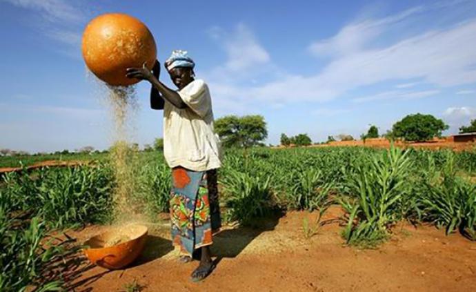 非洲疫線|新冠疫情下,非洲糧食安全面臨窘境
