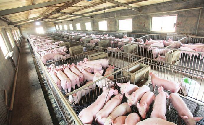 多家上市猪企披露3月销售情况:销售量及收入增加,售价下降