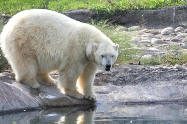 新明斯特动物园的动物。