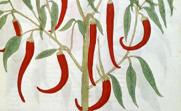 從舶來品到必需品:辣椒如何征服國人的胃?
