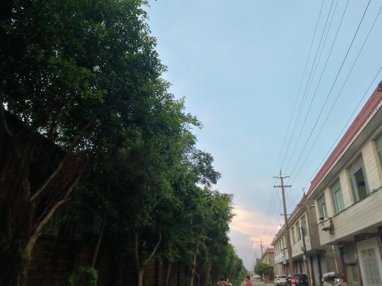图左树木旁是瓷砖厂围墙,右为搬迁后的住房。 本文图片均由作者提供