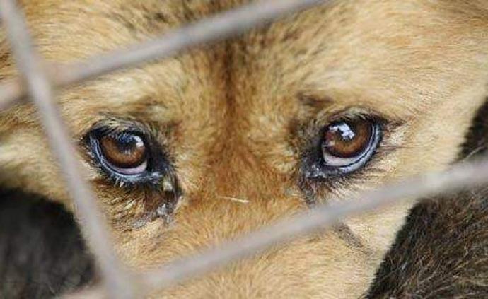 如何叫停虐待遺棄寵物:多地出臺管理規范,專家呼吁地方立法