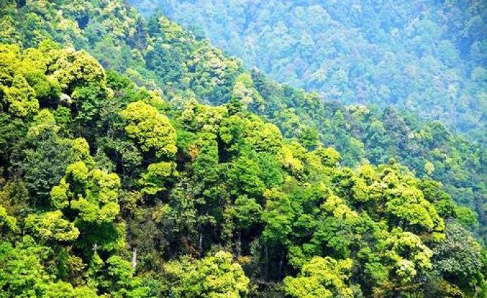 """生態氣象公報發布:近20年全國九成以上區域""""越來越綠"""""""