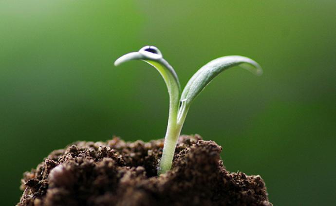 農業新基建:智慧農業落地,AI和物聯網讓農業生產全程可控