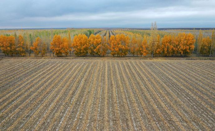 財政部:退耕還林每畝退耕地補助1200元,5年分三次下達