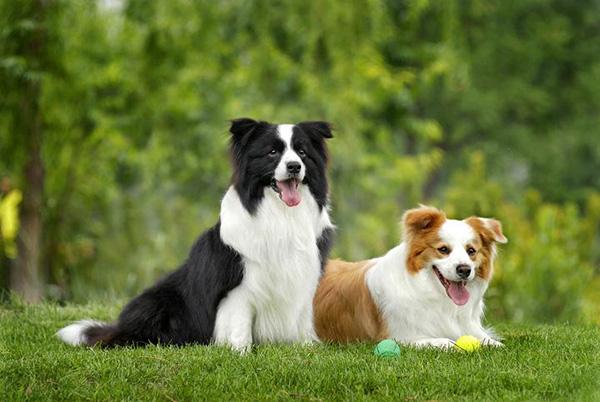 宁波规定了该市文明养犬的种种细则。