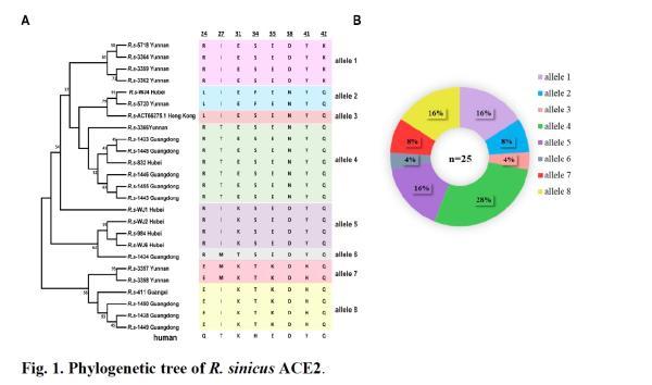 石正丽新研究:病毒与宿主间有进化军备竞赛,需持续监控蝙蝠