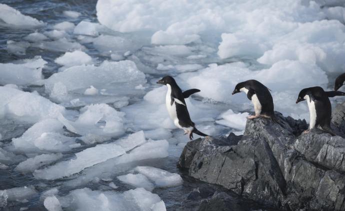 从爱知到昆明|拿什么实现保护30%全球海洋的目标?