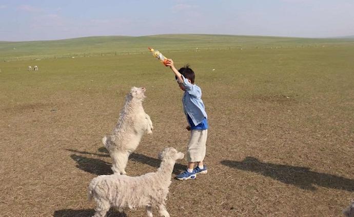 從鄉村到草原,兩代人的童年一樣豐盈