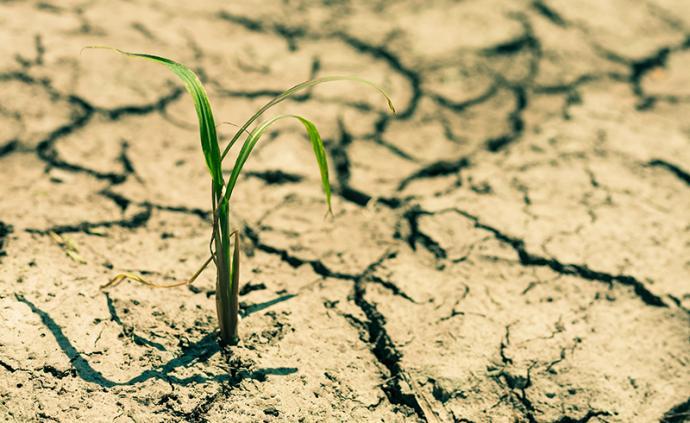 全國人大代表沈仁芳:呼吁加快推進土壤健康管理