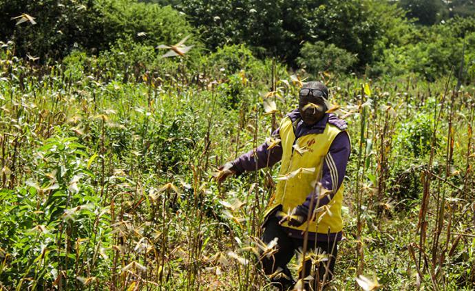 疫情下的非洲②|部分國家或現政治動蕩和糧食安全危機