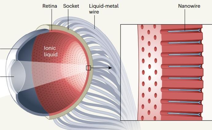 《自然》刊發中美人造眼技術新突破,分辨率有望高于人眼