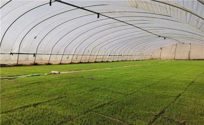 吉林省克服疫情影响推进春耕,预计种植面积超过8500万亩