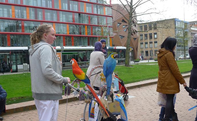 这一天,全荷兰都变成了跳蚤市场