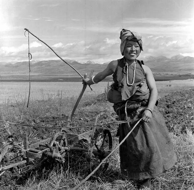 藏族女犁手,1960年代。