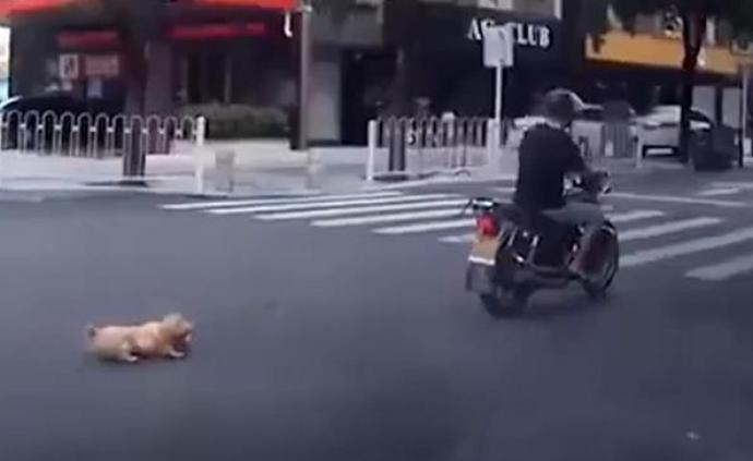 男子將小狗綁摩托車拖行百米,珠海警方:正調查,小狗被收養