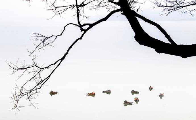 摄影师|李华春:我最满意那只鸟的照片,它有丰富的含义