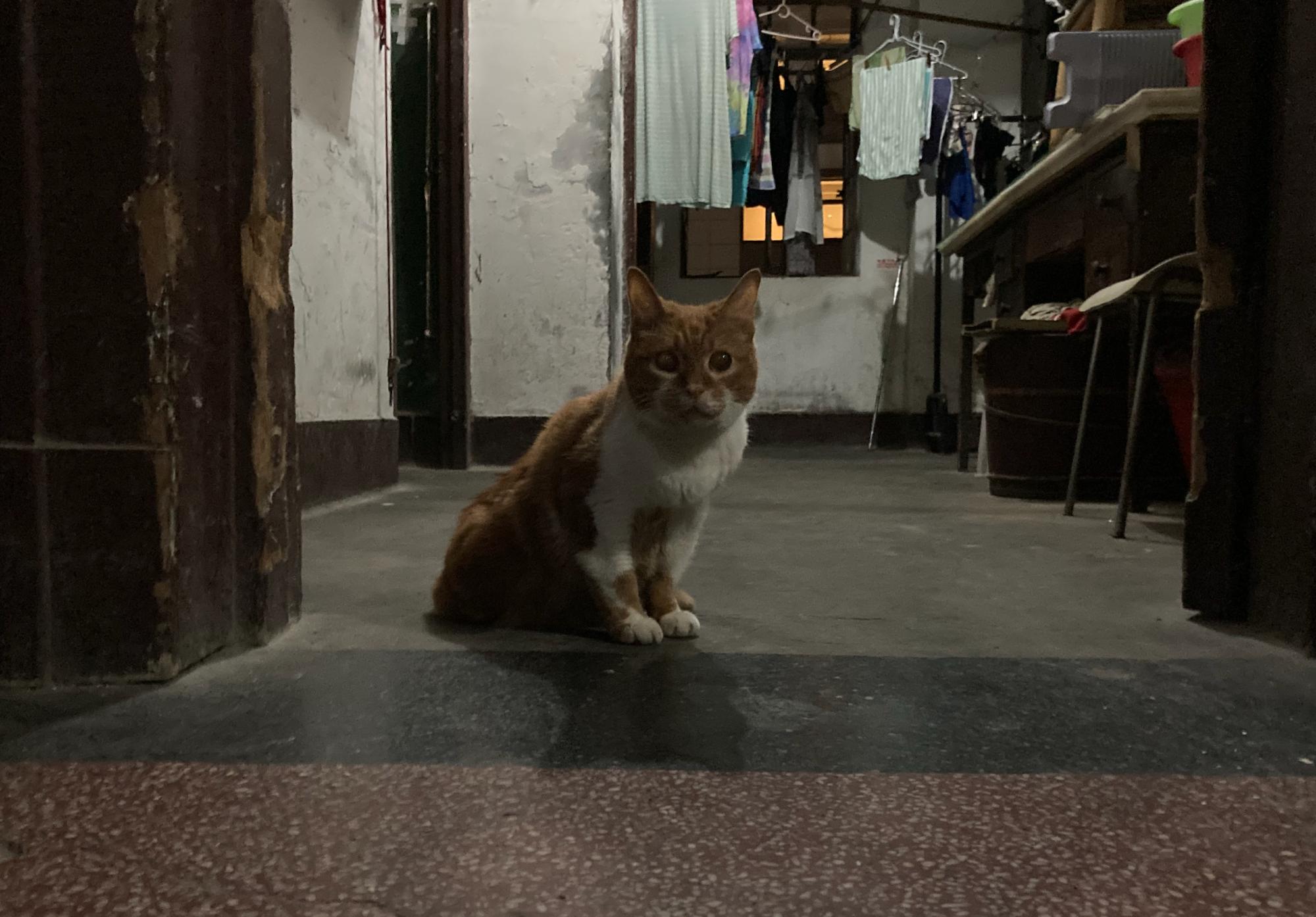 住在河滨大楼里的猫。 btr 图