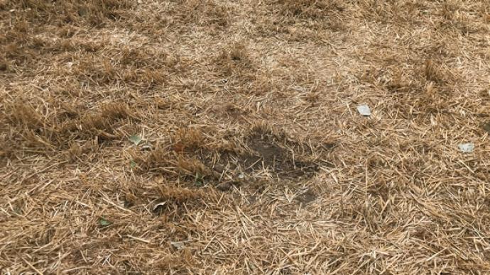 遺落的手榴彈:河南75歲農民之死