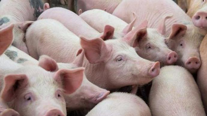 统计局:6月下旬23种生产资料价格上涨,生猪涨5.3%