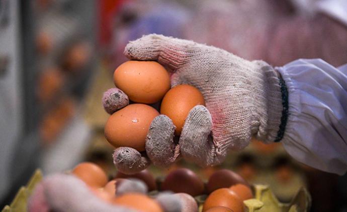 """鸡蛋价格大跌近三成,卖一斤亏0.7元!养殖户能否""""蛋""""定"""