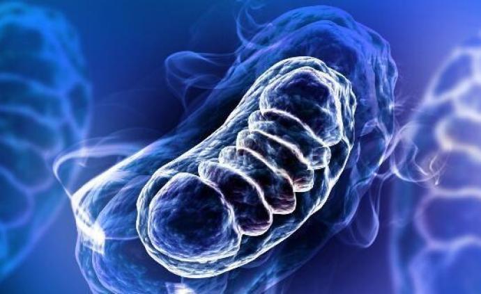 """""""能量工厂""""病了怎么办?科学家首次实现线粒体精准基因编辑"""