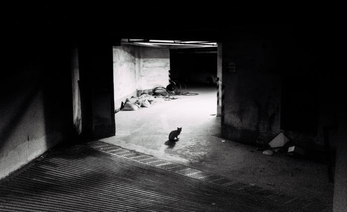 摄影师|张羽:跟着流浪猫走进沉默如谜的城市
