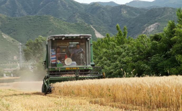 國家統計局:全國夏糧生產再獲豐收,產量創歷史新高