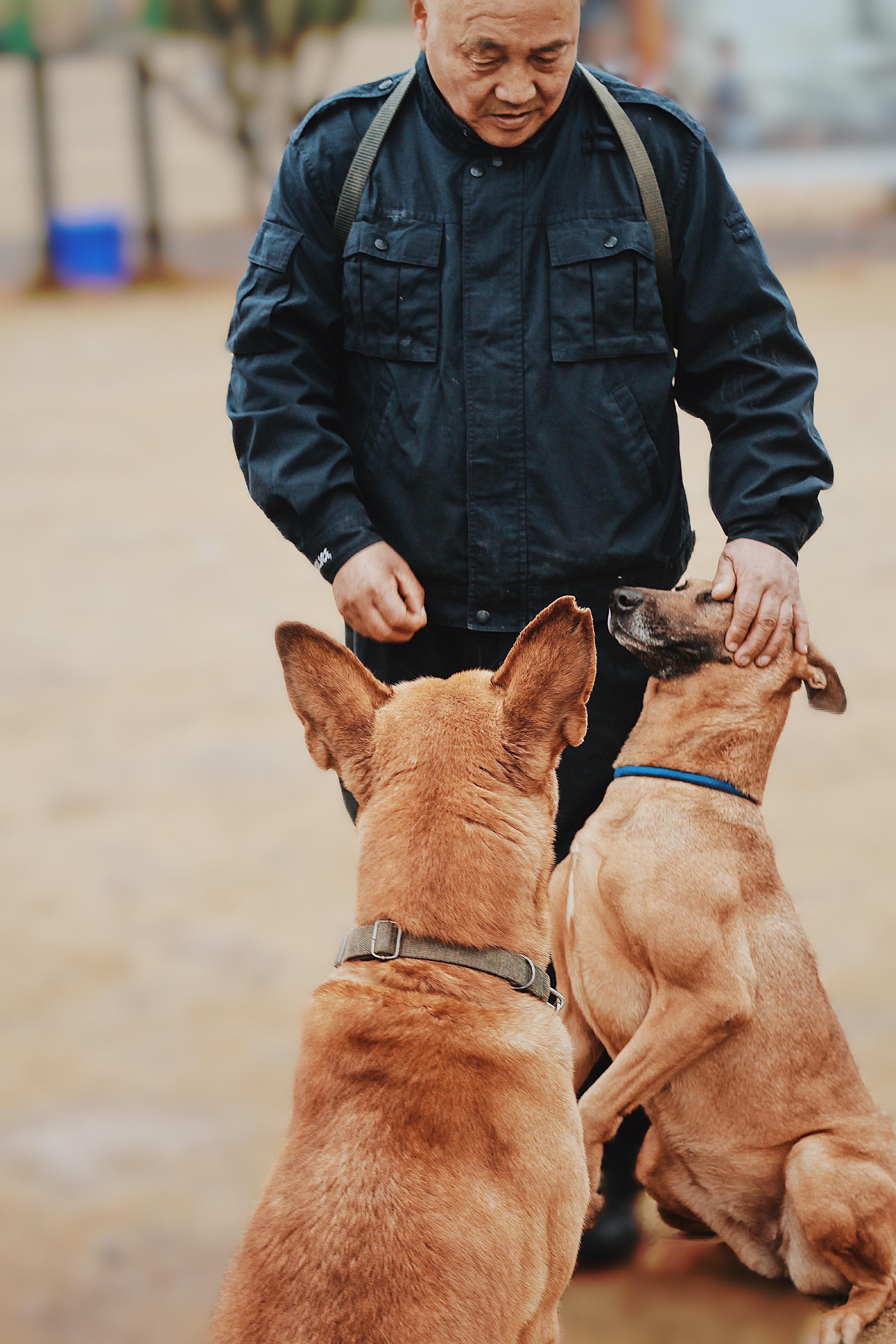退役警犬至今缺乏健全的管理制度,更难获取经费支持。白雁希望更多人可以关注到这个问题。