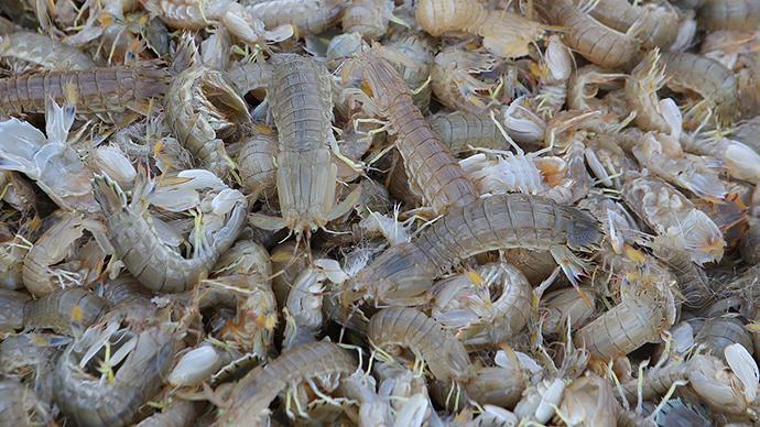 陕西抽检多批次食品不合格:水产养殖用抗生素、皮皮虾有镉