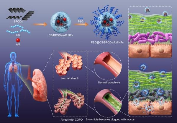 暗磷量子点介导的纳米药物控释载体(PEG@CS/BPQDs-AM NPs)制备过程及其穿透慢阻肺粘液屏障递送药物治疗暗示图 深圳先辈技术钻研院 图