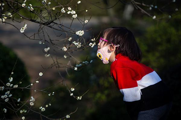 """2020年2月20日,杭州,因新冠肺热疫情关闭近一个月的杭州植物园重新盛开,在""""灵峰探梅""""景点,一个幼女孩摘下口罩,仔细闻了闻梅花。摄影 陈中秋"""