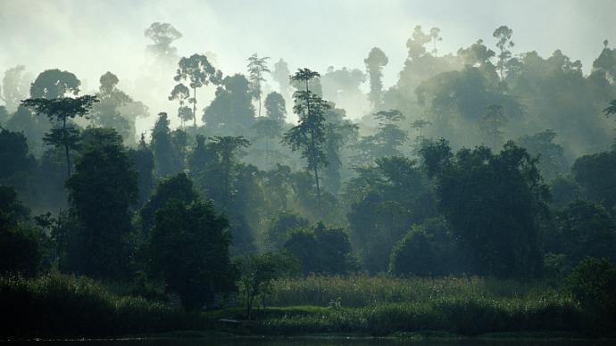 刘奎评《乌暗暝》︱黄锦树的树,历史的藤蔓缠绕